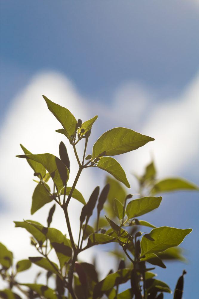 Fyld din have og dit hjem med spiselige blomster og planter