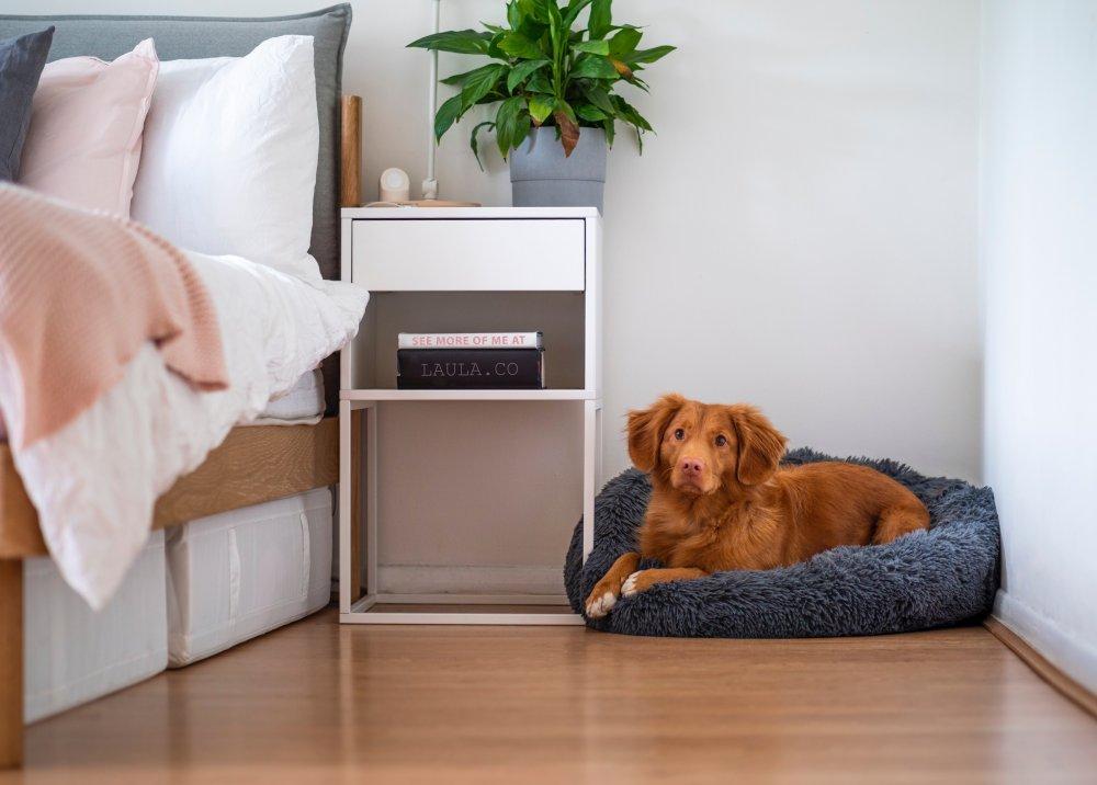 Dougnut hundeseng giver din hund tryghed og får den til at slappe af